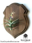 Air plant wall decor planter with Walnut Hollow shield plaque
