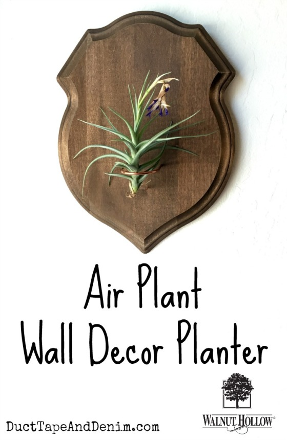 Air plant wall decor planter with Walnut Hollow shield plaque copy