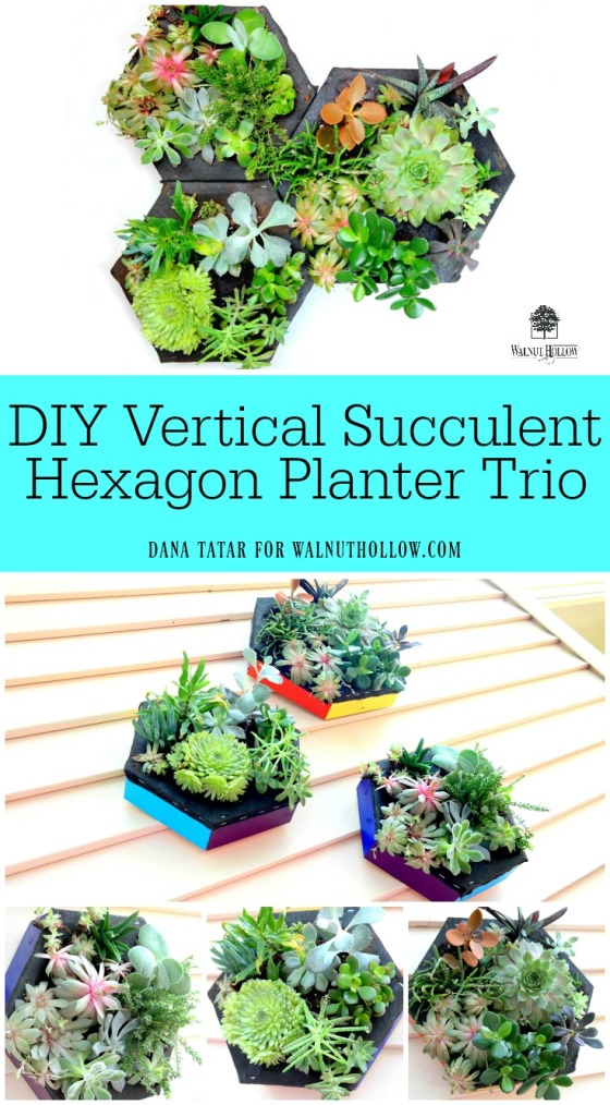 DIY Vertical Succulent Hexagon Planters Video Tutorial by Dana Tatar for Walnut Hollow