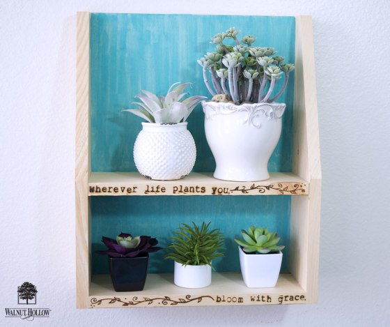 Succulent Display Shelf