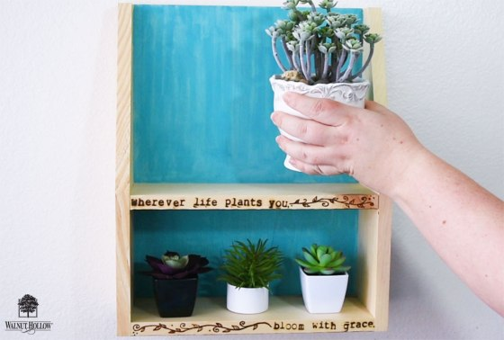 Display your Cute little Succulents